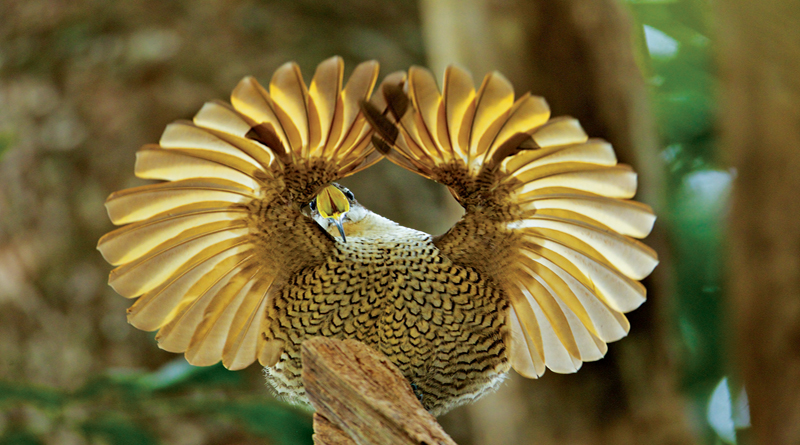 Oct. 8: Birds of Paradise at Perot Museum