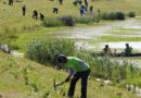 More Than 250 Volunteers Planted 1,000 Native Species and Cleaned Up Trash At The Trinity River Conservation Corps' Corporate Day Of Service