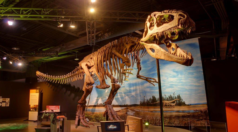Inaugural Dino Fest Takes Over The Perot Museum Of Nature And Science Sept. 1-2, Plus New Paleo Lab Officially Debuts Labor Day Weekend