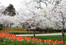 Dallas Arboretum Presents Dallas Blooms: Sounds of Spring