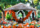 Nationwide Press Cites Dallas Arboretum as the Great Fall Experience with National and Local Accolades Pouring In