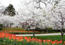 Dallas Arboretum Presents Dallas Blooms: Sounds of Spring