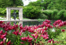 Dallas Arboretum and Botanical Garden Reopens on June 1 to the Public with Advance Ticket Reservation Required
