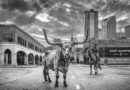 DAVID YARROW The Texas Series
