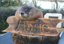 Arboretum Annie, Dallas' Favorite Groundhog Meteorologist, Predicts Six More Weeks of Winter