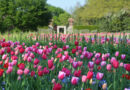 Dallas Arboretum Presents Dallas Blooms: America the Beautiful